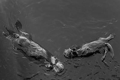 Photograph - Sea Otters Vii Bw by David Gordon
