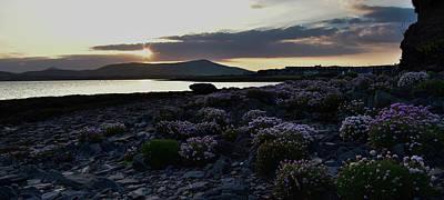 Photograph - Sea Pinks Dingle by Barbara Walsh