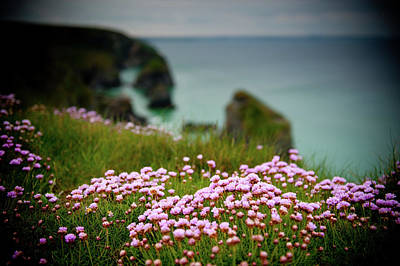 Photograph - Sea Pinks On A Cornish Cliff IIi by Helen Northcott