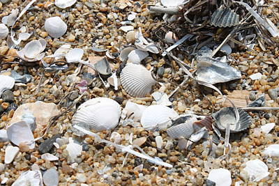 Sea Ribbons And Shells Art Print by Marcie Daniels