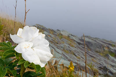 Photograph - Sea Rose by Garvin Hunter