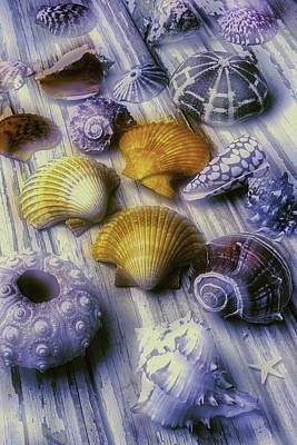 Sea Shell Arrangement  Art Print by Garry Gay