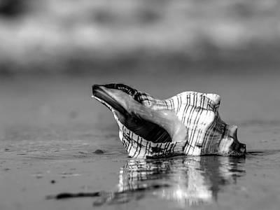 Photograph - Sea Shell By The Sea Shore B/w by Michael Damiani