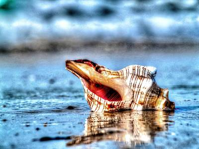Photograph - Sea Shell By The Sea Shore by Michael Damiani