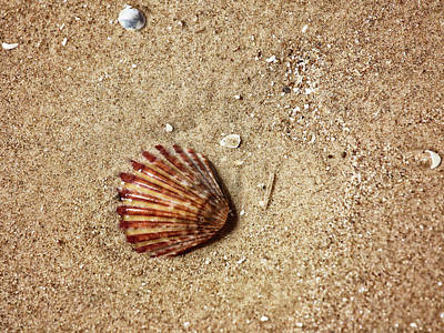 Photograph - Sea Shell by Charles McKelroy