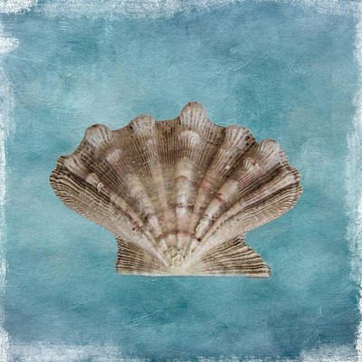 Photograph - Sea Shell by David and Carol Kelly