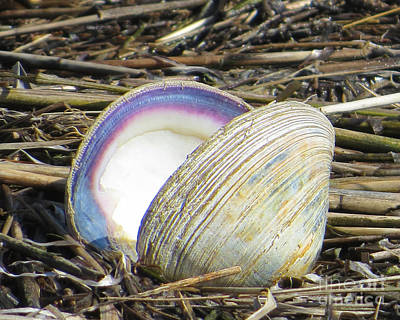 Photograph - Sea Shell  by Dawn Gari