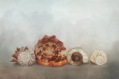 Photograph - Sea Shell Line Up by David and Carol Kelly