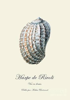 Sea Shell Art Print by Patruschka Hetterschij