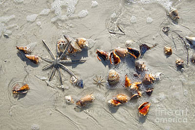Photograph - Sea Shells And Starfish by David Arment
