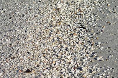Photograph - Sea Shells By The Sea Shore by Danielle Allard