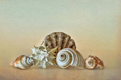 Photograph - Sea Shells By The Seashore by David and Carol Kelly