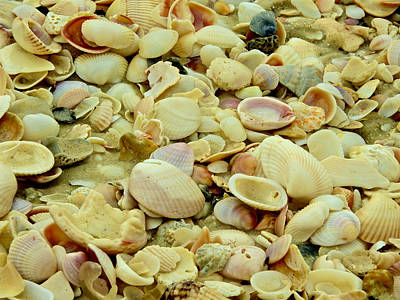 Photograph - Sea Shells By The Seashore I by Kathi Isserman