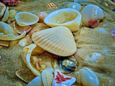 Photograph - Sea Shells By The Seashore II by Kathi Isserman