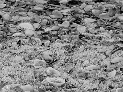 Photograph - Sea Shells By The Seashore by Kathi Isserman