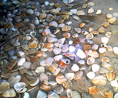 Sea Shells Art Print by Evelyn Patrick