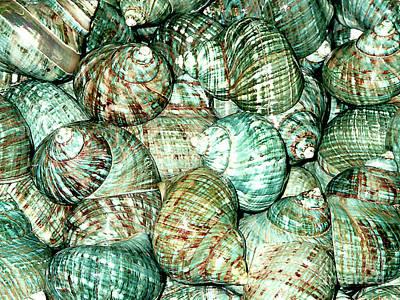 Photograph - Sea Shells For Sale - Florida Keys by Merton Allen