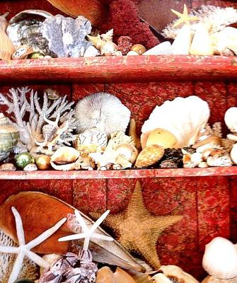 Step Stool Photograph - Sea Shells by Frederick Lyle Morris