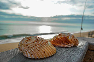 Photograph - Sea Shells by Josy Cue