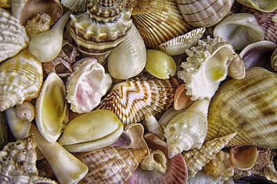 Photograph - Sea Shells Landscape by LeeAnn McLaneGoetz McLaneGoetzStudioLLCcom