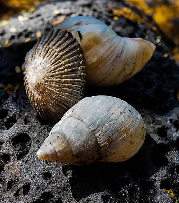 Photograph - Sea Shells by Pamela Walton