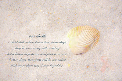 Photograph - Sea Shells by Pamela Williams