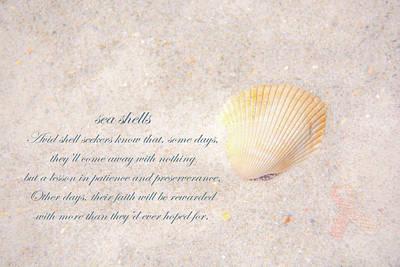 Photograph - Sea Shells by Pamela Williams