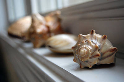 Photograph - Sea Shells by Robert Meanor