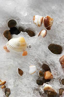 Sea Shells Rocks And Ice Print by Matt Suess