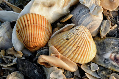 Photograph - Sea Shells by Thomas Pettengill
