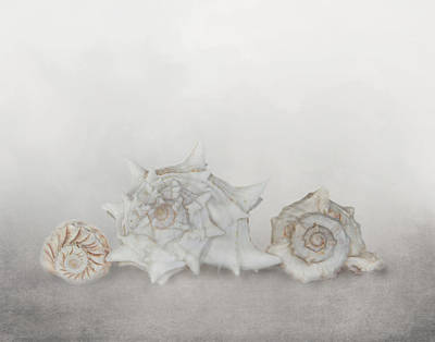 Photograph - Sea Shells Three by David and Carol Kelly