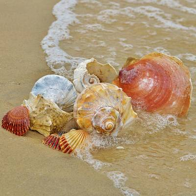 Photograph - Sea Shells, A Collection Of Conch, Scallop, Clam And Other Shells In The Sand At The Waters Edge. by William Bartholomew