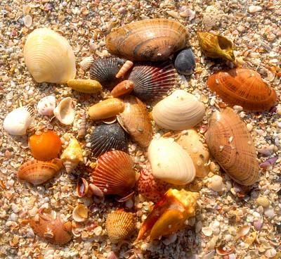 Sea Shells Work D Art Print by David Lee Thompson