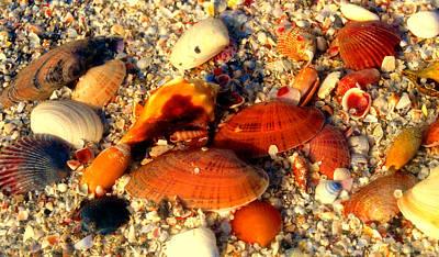 Sea Shells Work E Art Print by David Lee Thompson