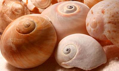 Photograph - Sea Spirals by Barbara  White