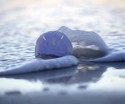 Topsail Island Photograph - Sea Splash by Betsy Knapp