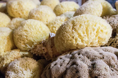 Photograph - Sea Sponges by Ana Mireles