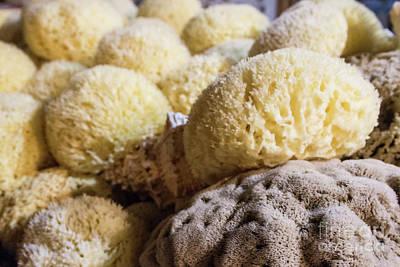Photograph - Sea Sponges by Ana Mireles