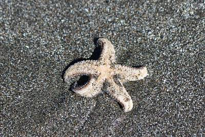 Photograph - Sea Star - 2  by Christy Pooschke