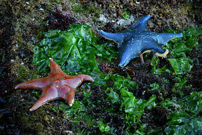 Haida Gwaii Photograph - Sea Star by Christian Heeb