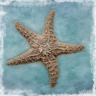 Photograph - Sea Star by David and Carol Kelly