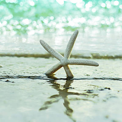 Seashells Photograph - Sea Star by Laura Fasulo