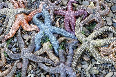 Photograph - Sea Star Rainbow by Frank Townsley