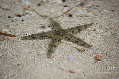 Photograph - Sea Star by Wilko Van de Kamp