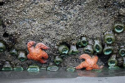 Photograph - Sea Stars And Anemones  by Christy Pooschke