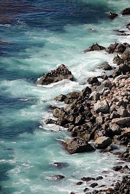 Photograph - Sea Swirls And Sea Lions - 2 by Christy Pooschke