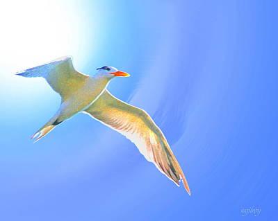 Sea Tern If I Were A Bird Original