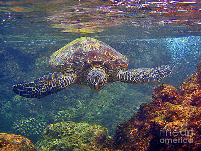 Hawaiian Green Sea Turtle Photograph - Sea Turtle - Close Up by Bette Phelan