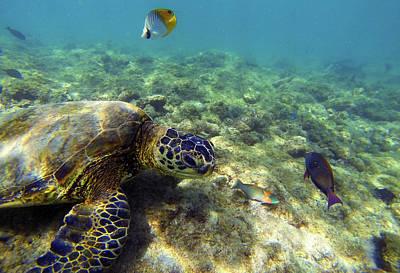 Green Sea Turtle Photograph - Sea Turtle #1 by Anthony Jones