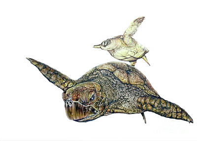 Painting - Sea Turtle 4 by Pete Sintes